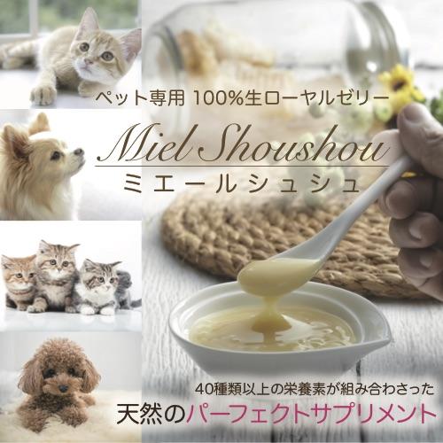 MSS_バナー-紹介用